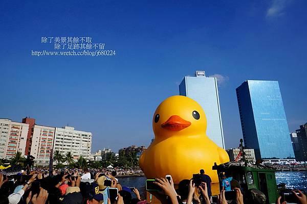 黃色小鴨 (15)