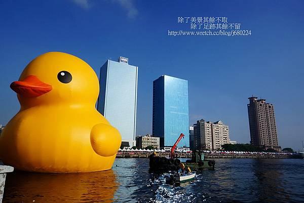 黃色小鴨 (19)