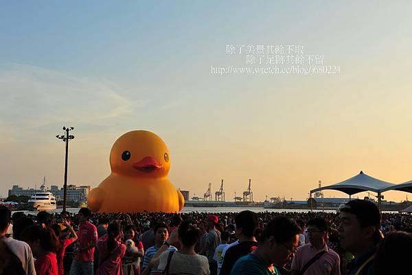 黃色小鴨 (81)