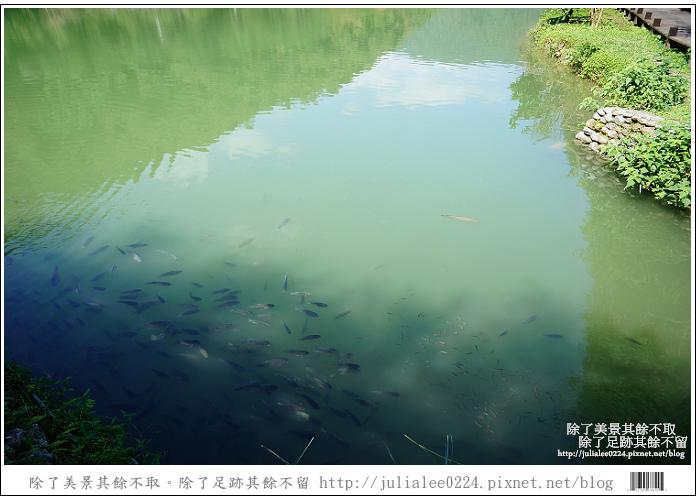 望龍埤 (61).jpg