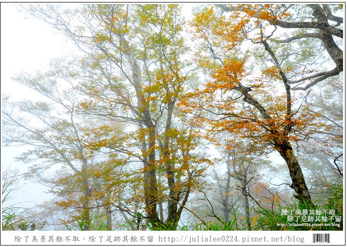 DSC_6775.jpg
