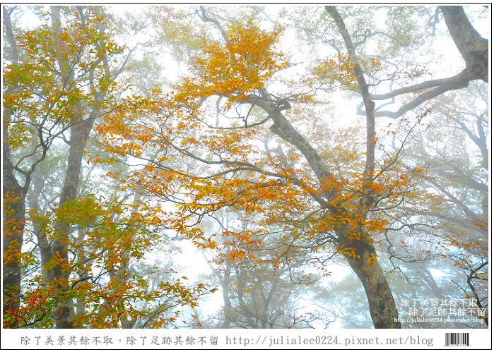 DSC_6777.jpg