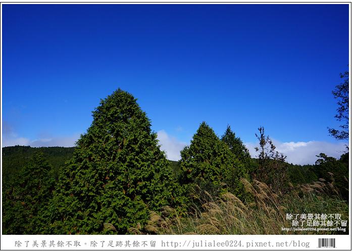 山毛櫸步道 (2).jpg