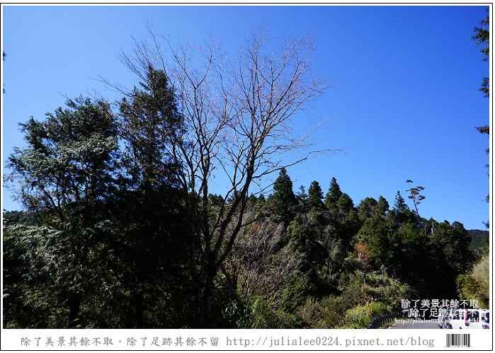 山毛櫸步道 (3).jpg
