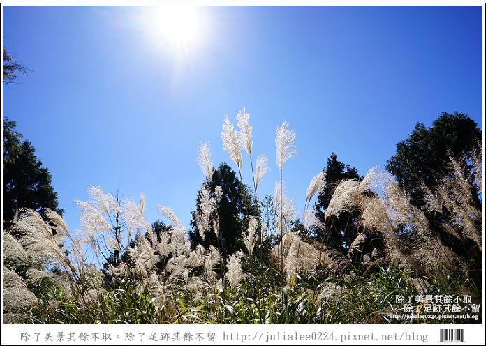 山毛櫸步道 (14).jpg