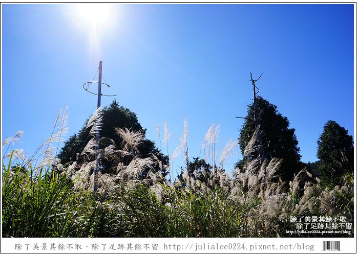 山毛櫸步道 (19).jpg