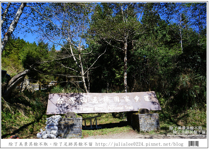 山毛櫸步道 (22).jpg