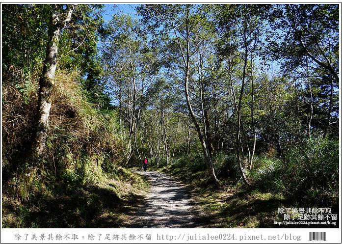 山毛櫸步道 (23).jpg