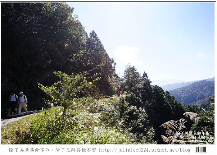 山毛櫸步道 (30).jpg