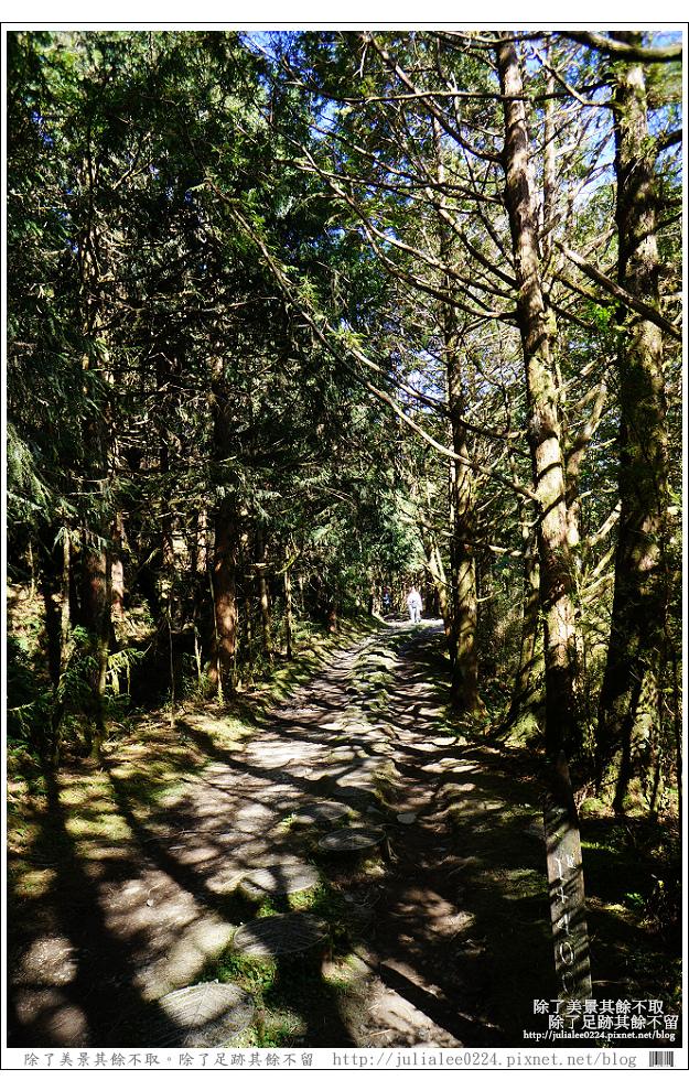 山毛櫸步道 (39).jpg