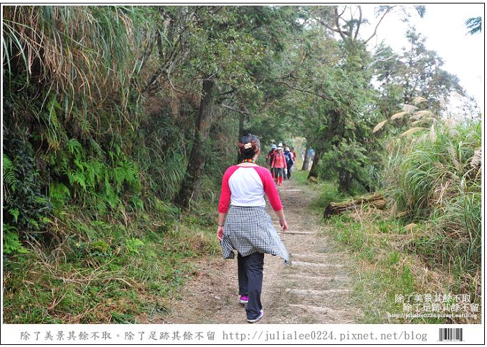 山毛櫸步道 (44).jpg