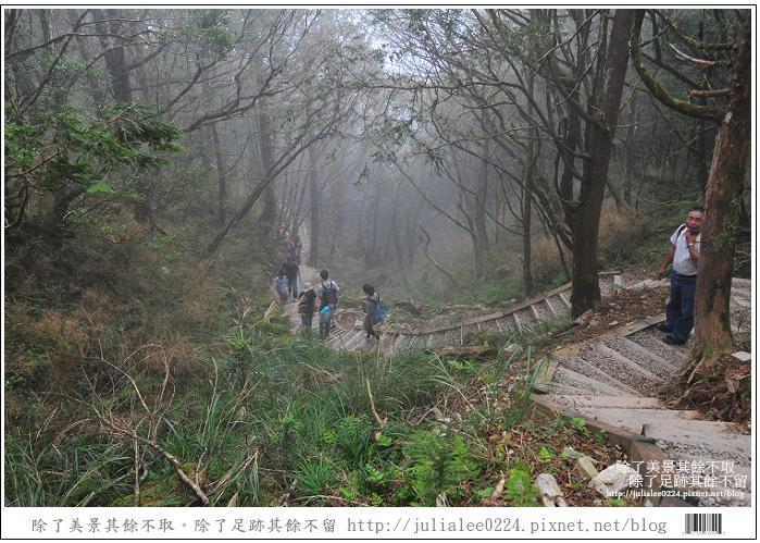 山毛櫸步道 (49).jpg
