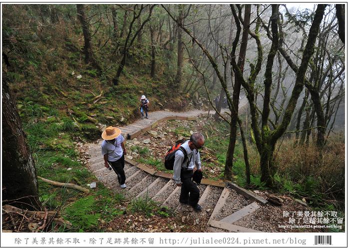 山毛櫸步道 (50).jpg