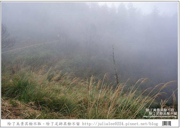 山毛櫸步道 (76).jpg