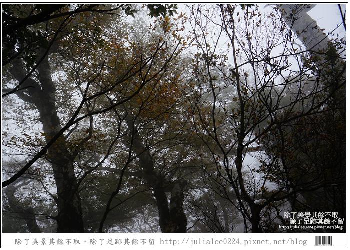 山毛櫸步道 (78).jpg