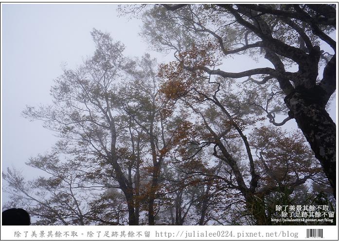 山毛櫸步道 (79).jpg