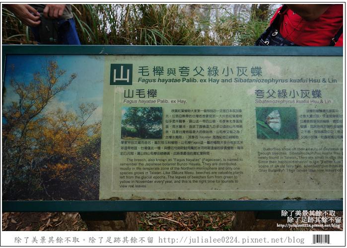 山毛櫸步道 (86).jpg