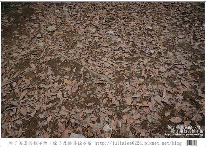 山毛櫸步道 (87).jpg