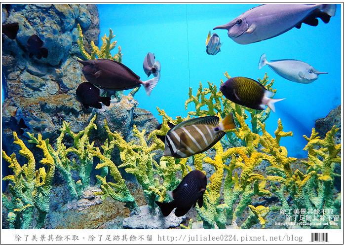 登別海洋公園尼克斯 (29)