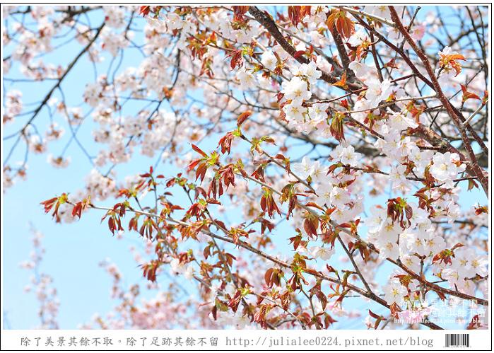 大沼國定公園 (78)
