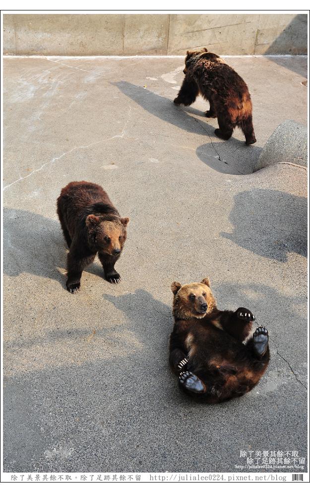 熊牧場 (35).jpg