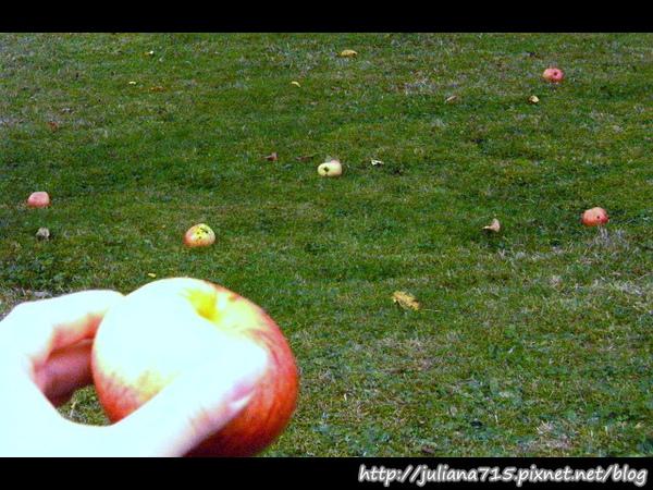PhotoCap_080920108 馬堡街景蘋果樹.jpg