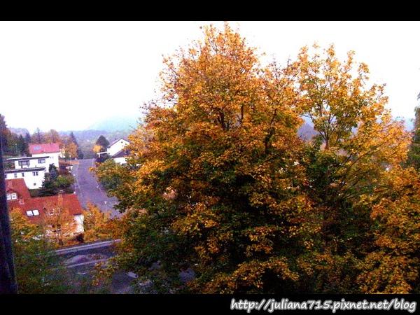 PhotoCap_08101301 窗戶眺望楓紅.jpg