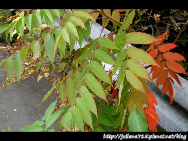 PhotoCap_08092083 馬堡街景葉 (Helen).jpg