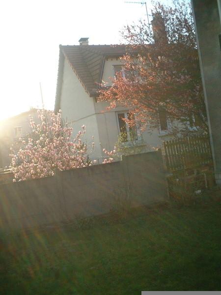 我家後院.JPG