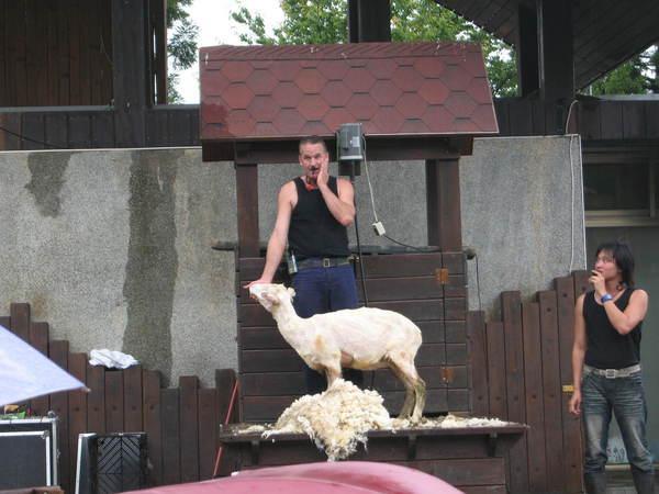 裸體羊.jpg