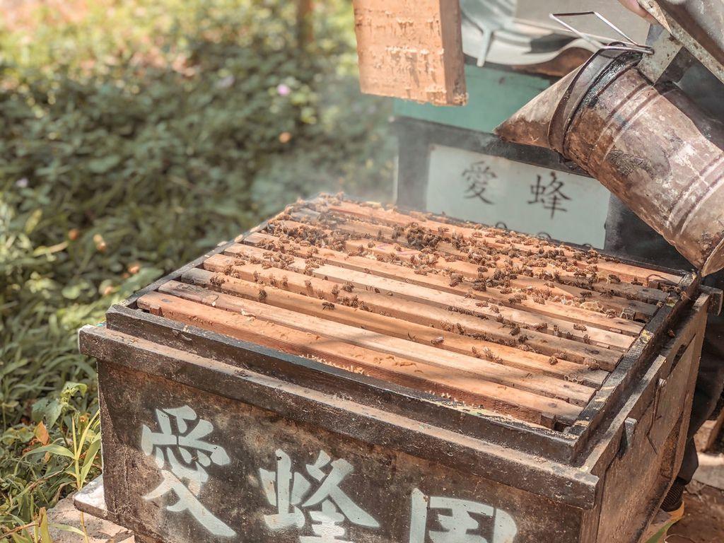 愛蜂園養蜂體驗