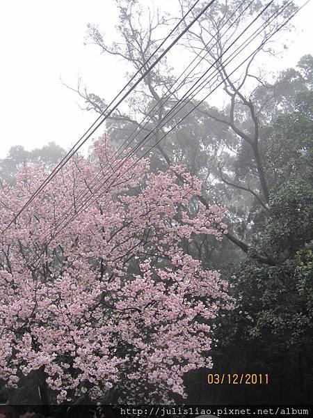 2011.03.12 淡水天元宮賞櫻行 (16).JPG