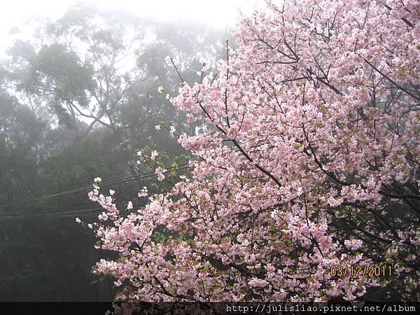 2011.03.12 淡水天元宮賞櫻行 (24).JPG