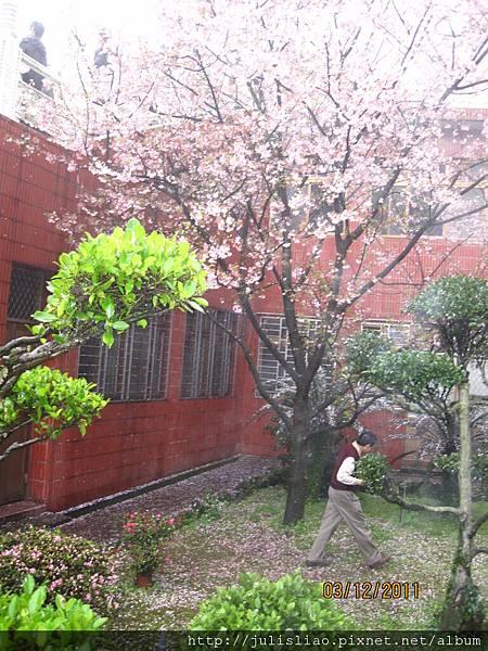2011.03.12 淡水天元宮賞櫻行 (26).JPG