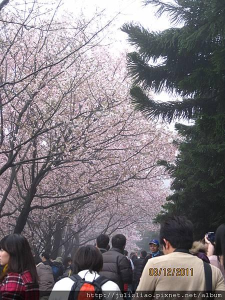 2011.03.12 淡水天元宮賞櫻行 (29).JPG