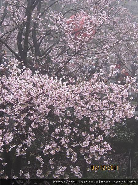 2011.03.12 淡水天元宮賞櫻行 (57).JPG