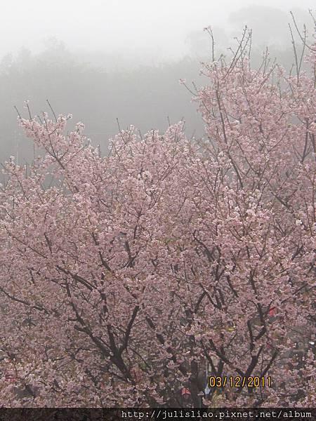 2011.03.12 淡水天元宮賞櫻行 (67).JPG