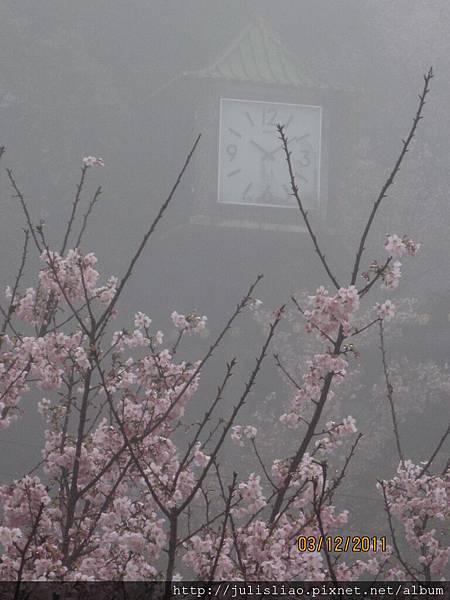 2011.03.12 淡水天元宮賞櫻行 (68).JPG