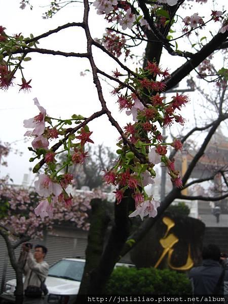 2011.03.12 淡水天元宮賞櫻行 (93).JPG