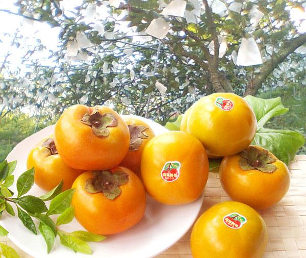柿子3.jpg