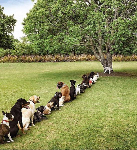 真的不能再砍樹了.JPG