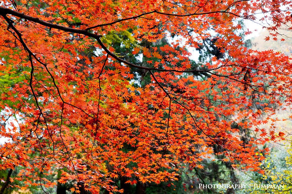 2012_Momiji_04