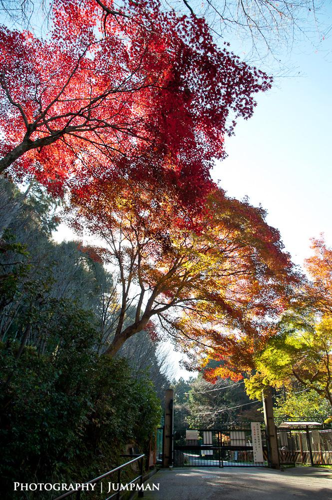 2012_Momiji_14