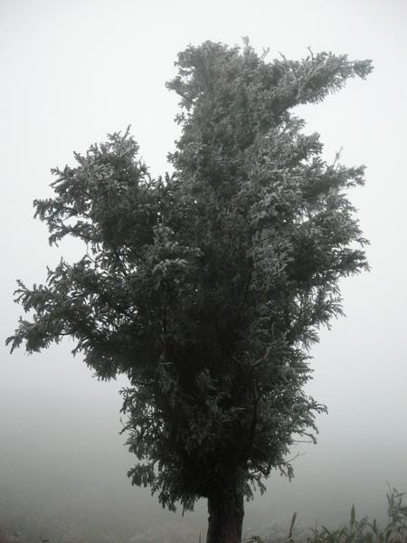 冰封七星山 285 (138).JPG