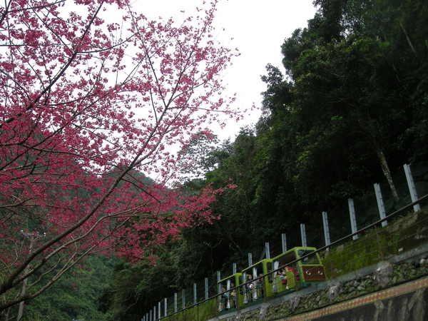 烏來野溪溫泉 133.JPG