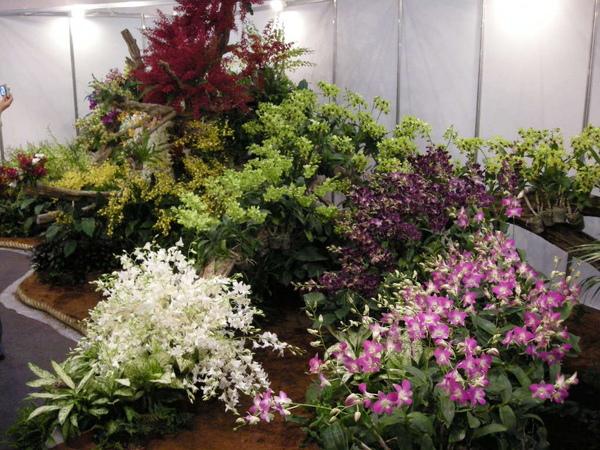 小巨蛋花卉展 062.JPG