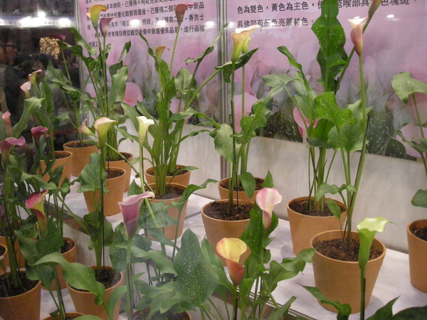 小巨蛋花卉展 085.JPG
