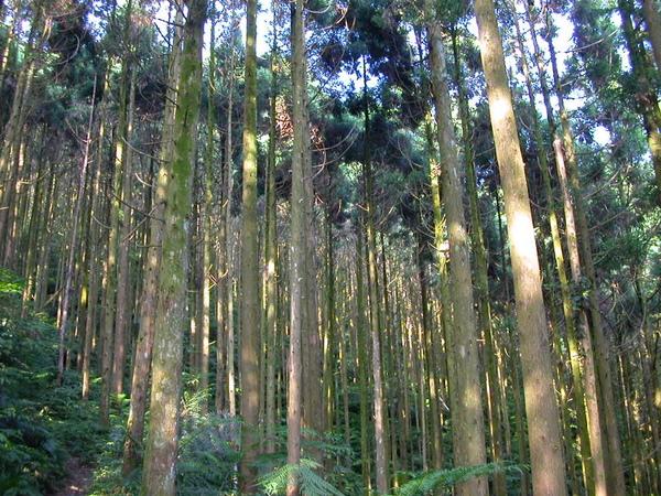 烏來大桶山 066.JPG