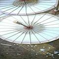 紙傘_2355-800x600 - 複製.jpg