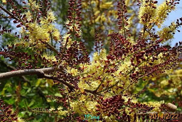 墨水樹 (11)